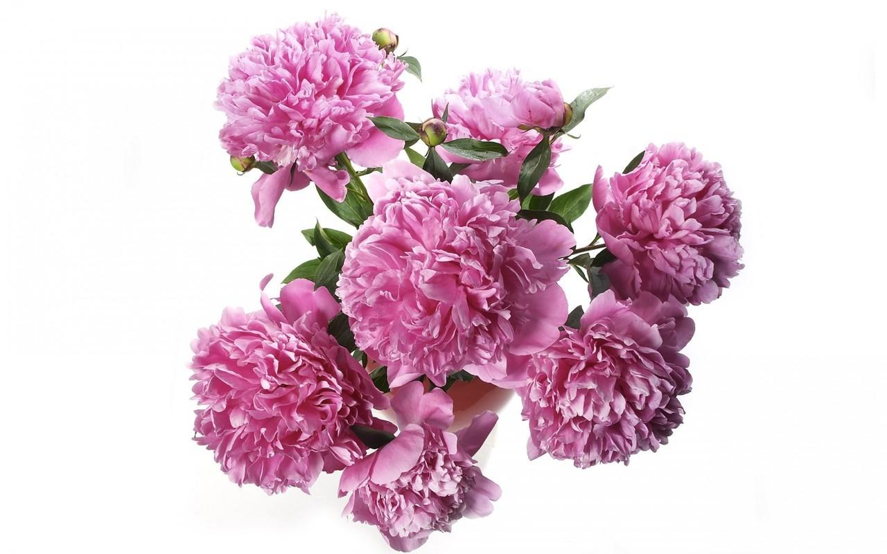 http://4.bp.blogspot.com/-2VuCnUnw9Ow/UQ351xYiL6I/AAAAAAAACi4/Mye2IlOp3Bw/s1600/Free+HD+Flower+Pictures.jpg