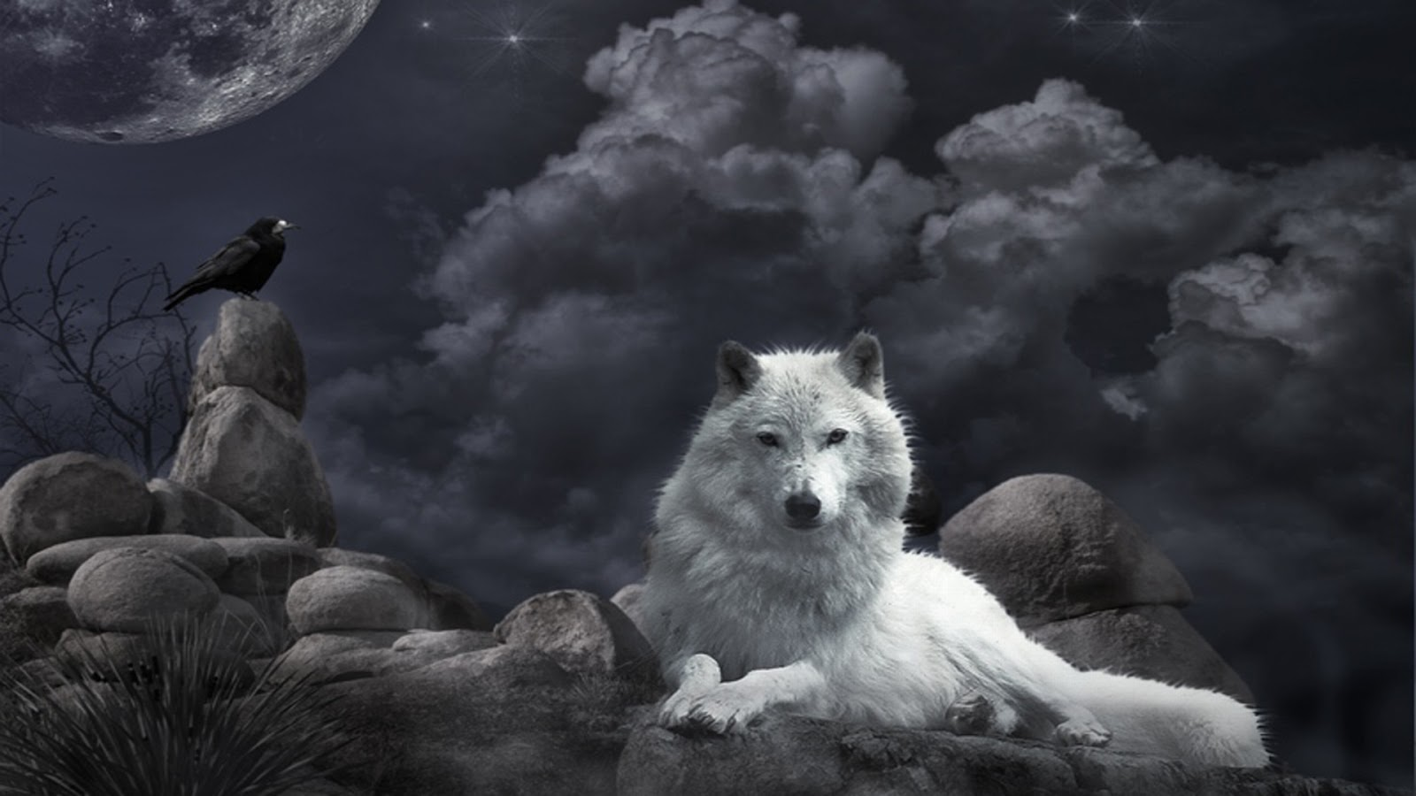 beautiful wallpapers beautiful wolf wallpapers
