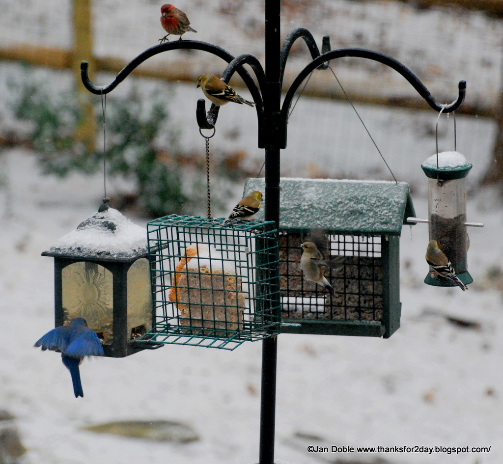 backyard birds u2014we u0027ve got u0027em here blog archives