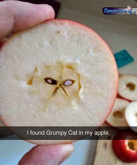funny grumpy cat apple