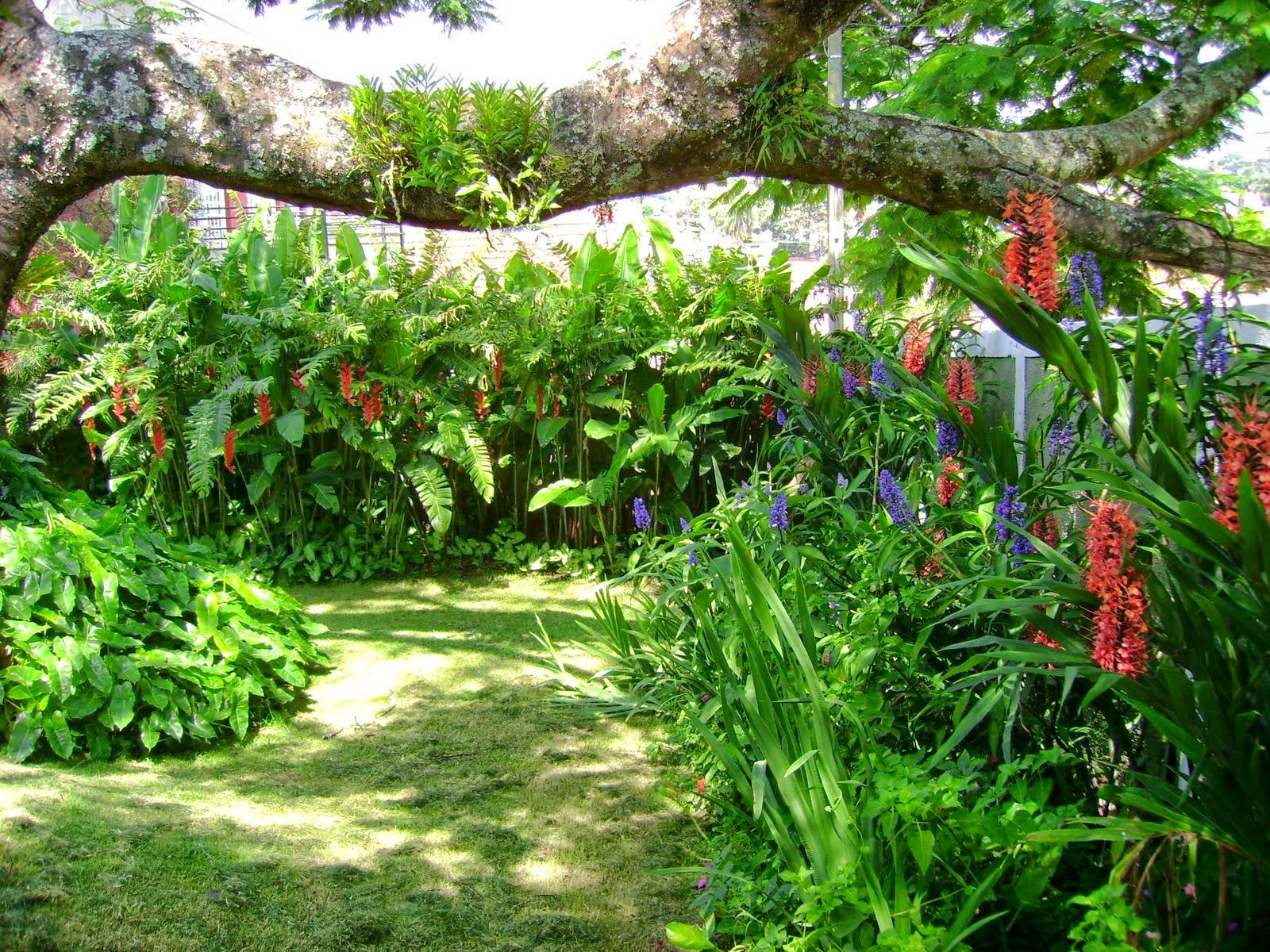 plantas jardins tropicais : plantas jardins tropicais:maioria das plantas são perenes, também não será necessário