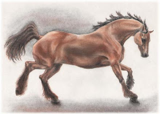 horse drawings, charcoal drawings, equine art