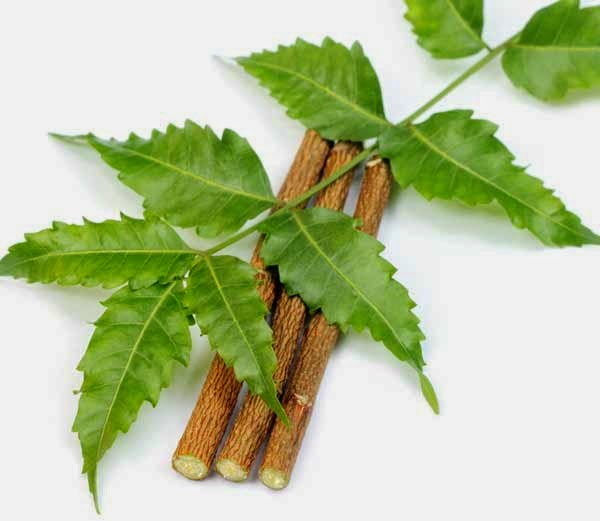 How Neem useful for your Skin