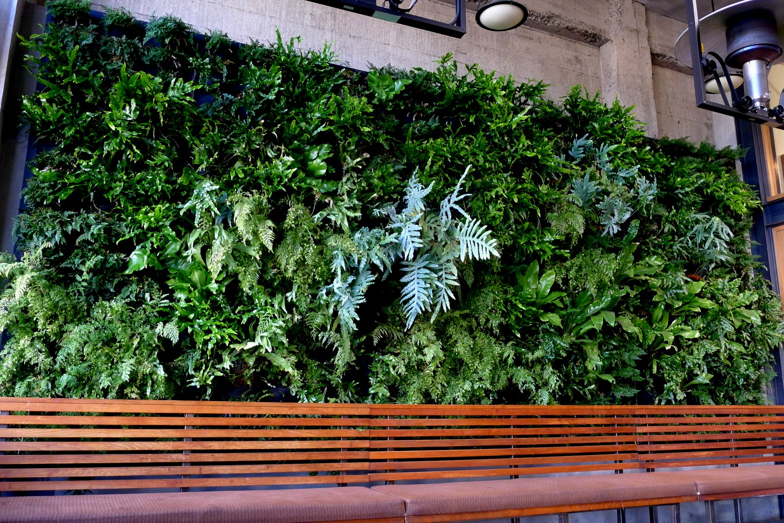 Plants on walls vertical garden systems plants on walls for Wall garden system