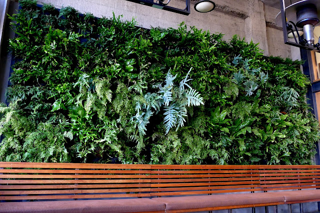 PlantsOnWalls revisits its year-old vertical garden fern wall installation for Urban Bistro in Burlingame, CA. http://PlantsOnWalls.com/