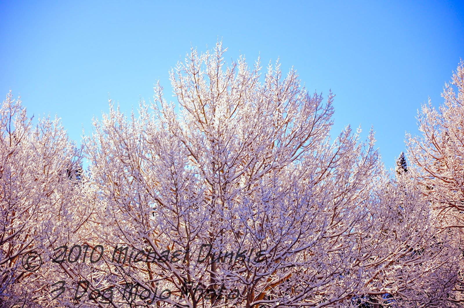 """Frozen May Morning"""