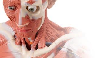 Anatomia Cabeça e Pescoço-ACPUPE