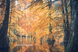 automne autumn in france trees et arbres zed photographie