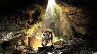 Tiger In The Light Cave HD Wallpaper