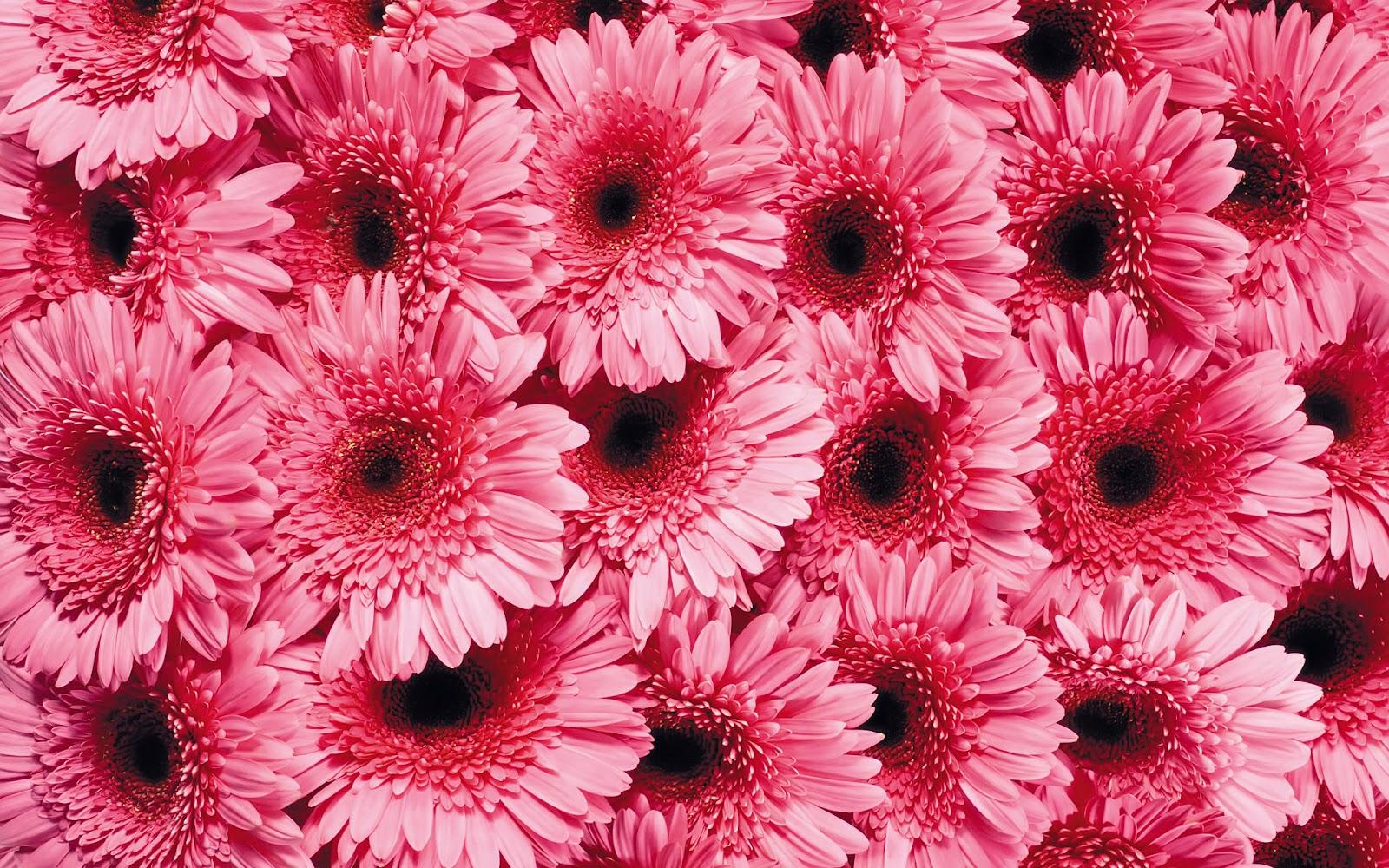 bureaublad achtergrond vol met fel roze bloemen