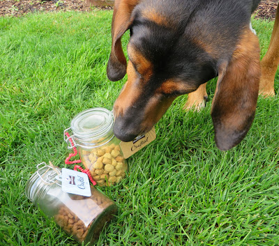 Kibble Dog Food Good Or Bad