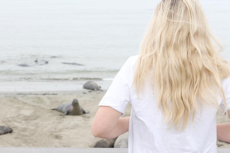 CALIFORNIA // ELEPHANT SEALS