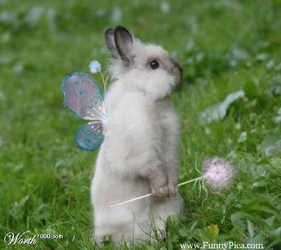 Hình ảnh thỏ dễ thương, cute
