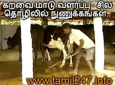 Karavai maadu valarppu thozhil nunukkangal, siru thozhil ideas, maattu pannai thozhil, small business ideas, cow farming ideas in and tips in tamil, Basics of cow farming, paal maadu, kandru kutti, kaalnadai valarppu
