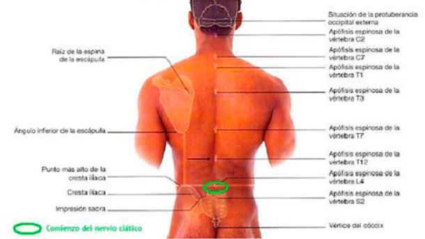 Los dolores la parte derecha de la espalda se ha hinchado