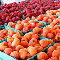 Raspberry Harvest Verrill Farm MA New England Fall Events