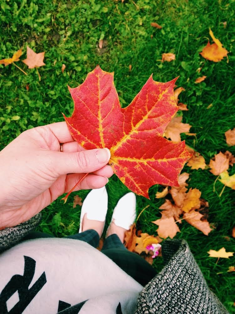 My Favorite Things About Autumn/ Fall
