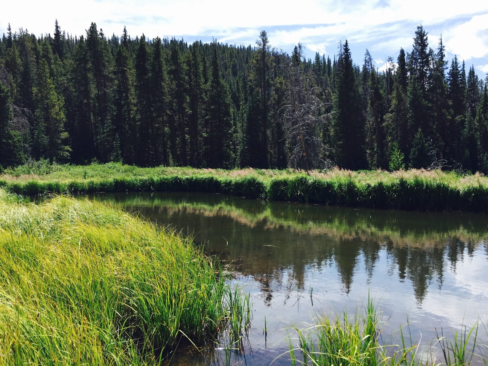 Fly fishing with brent cannon breckenridge beaver ponds for Breckenridge co fishing