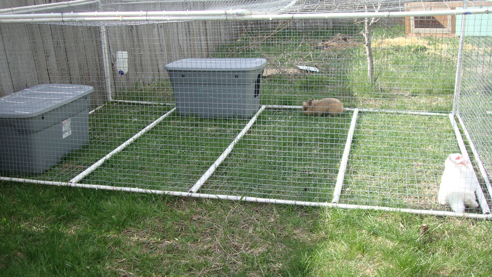 Little avalon farm pvc rabbit tractor and we 39 re done for Pvc rabbit cage