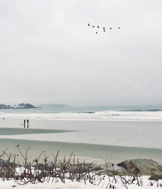 Maine beaches, beach, winter, surfing, birds