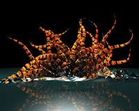 Creating abstract tentacle in Maya