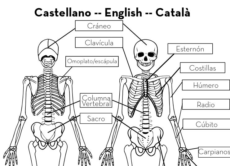 Esqueleto en Tamaño Real -- Imprimible Gratis   Handbox Craft ...