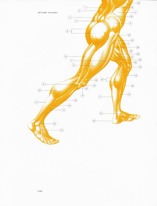 Burne hogarth dynamic anatomy