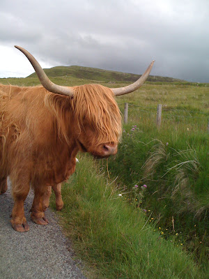 Isle of Skye in Scotland Highland Cattle