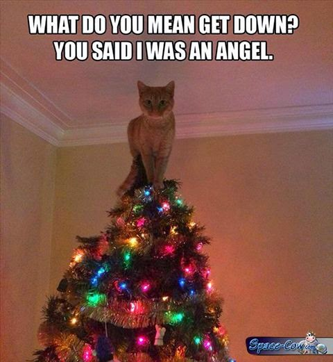 funny cute tree cat