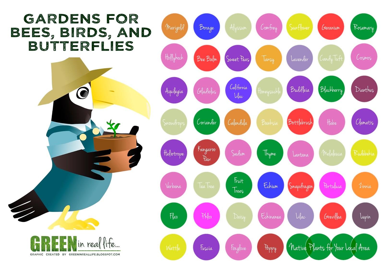 Verde en la vida real: Ideas para el jardín casero - abejas, pájaros, y mariposas
