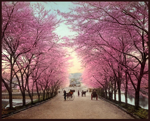 Three Cheers For Cherry Blossoms And A Giveaway Home