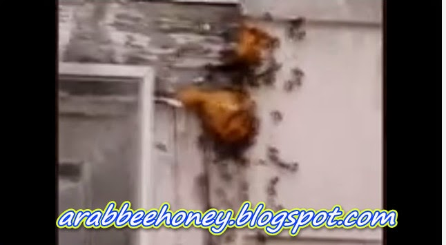 Video - The Bee attack