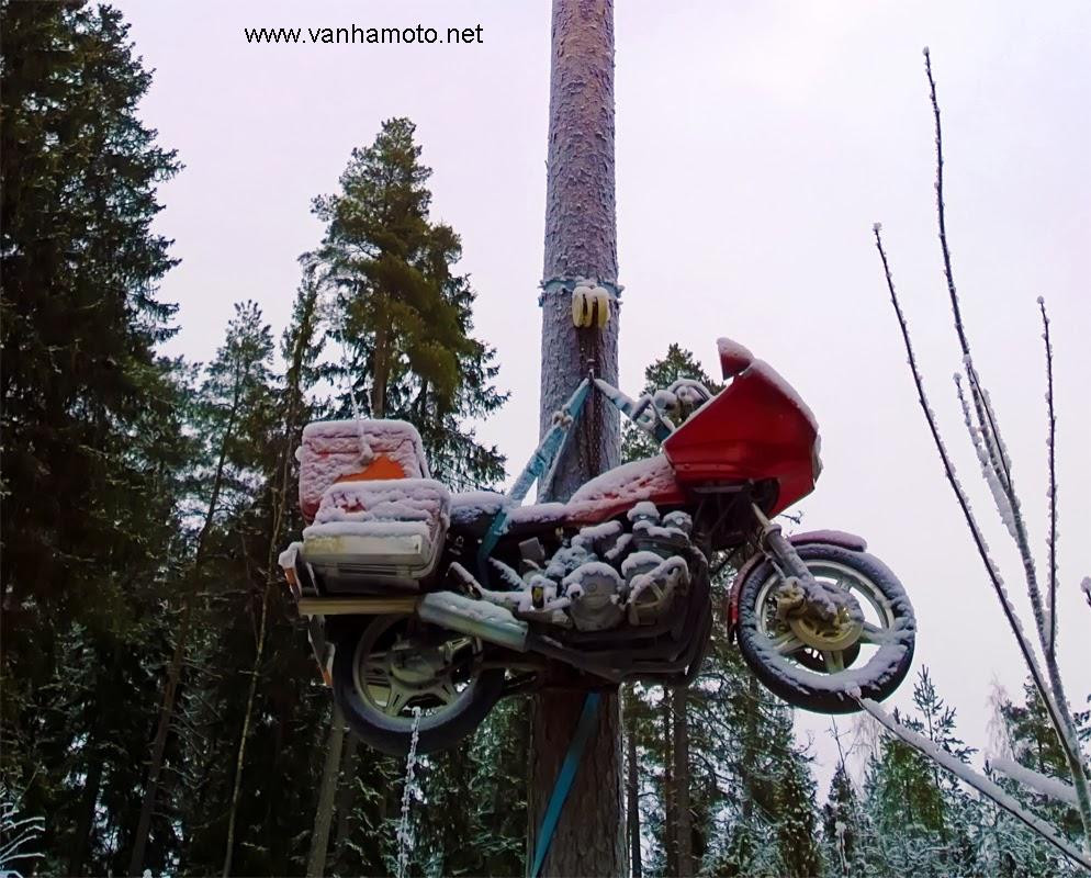 moottoripyörä puussa, motorbike in a tree