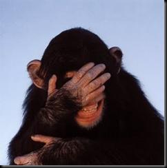 monyet,
