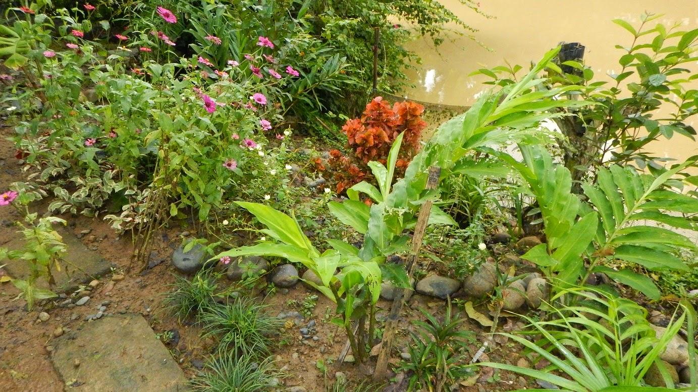 the solitude of gardening Love of gardening item  weeds • love of animals • love of freedom • love of gardening • love of revolution • love of shinies • love of solitude.