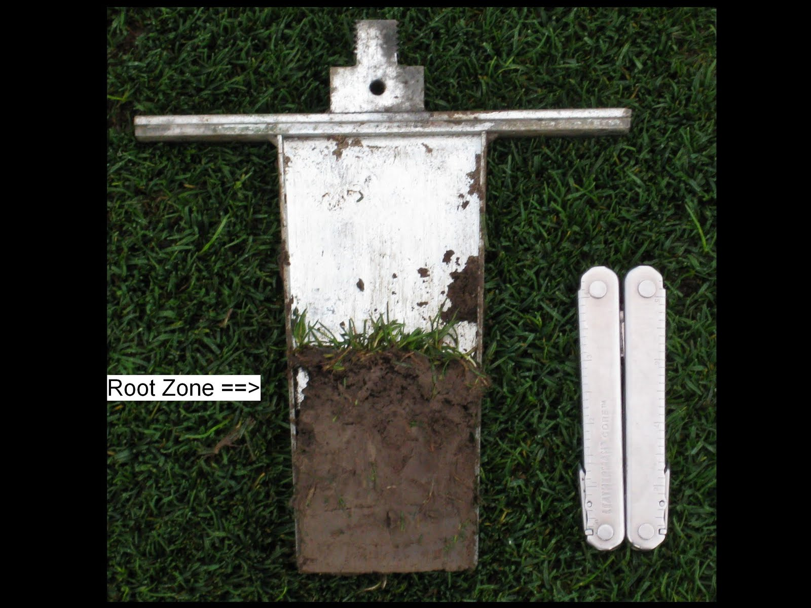 meadowbrook country club golf course maintenance poa annua root