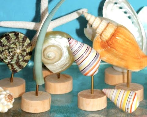 museum like sea shell display stands made from wood