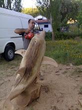 Golfinho esculpido em madeira