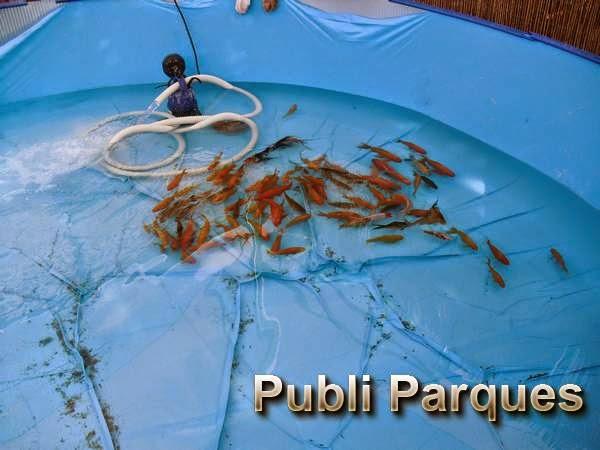 Peces piscina Terra Natura Murcia