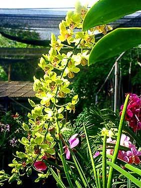 Thai Orchid Garden Phuket