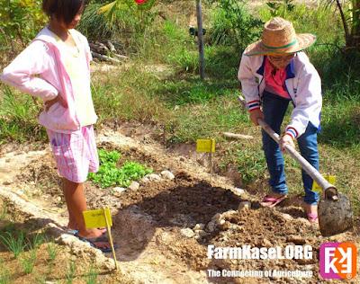 การสังเกตุการขาดธาตุอาหาร ของพืช