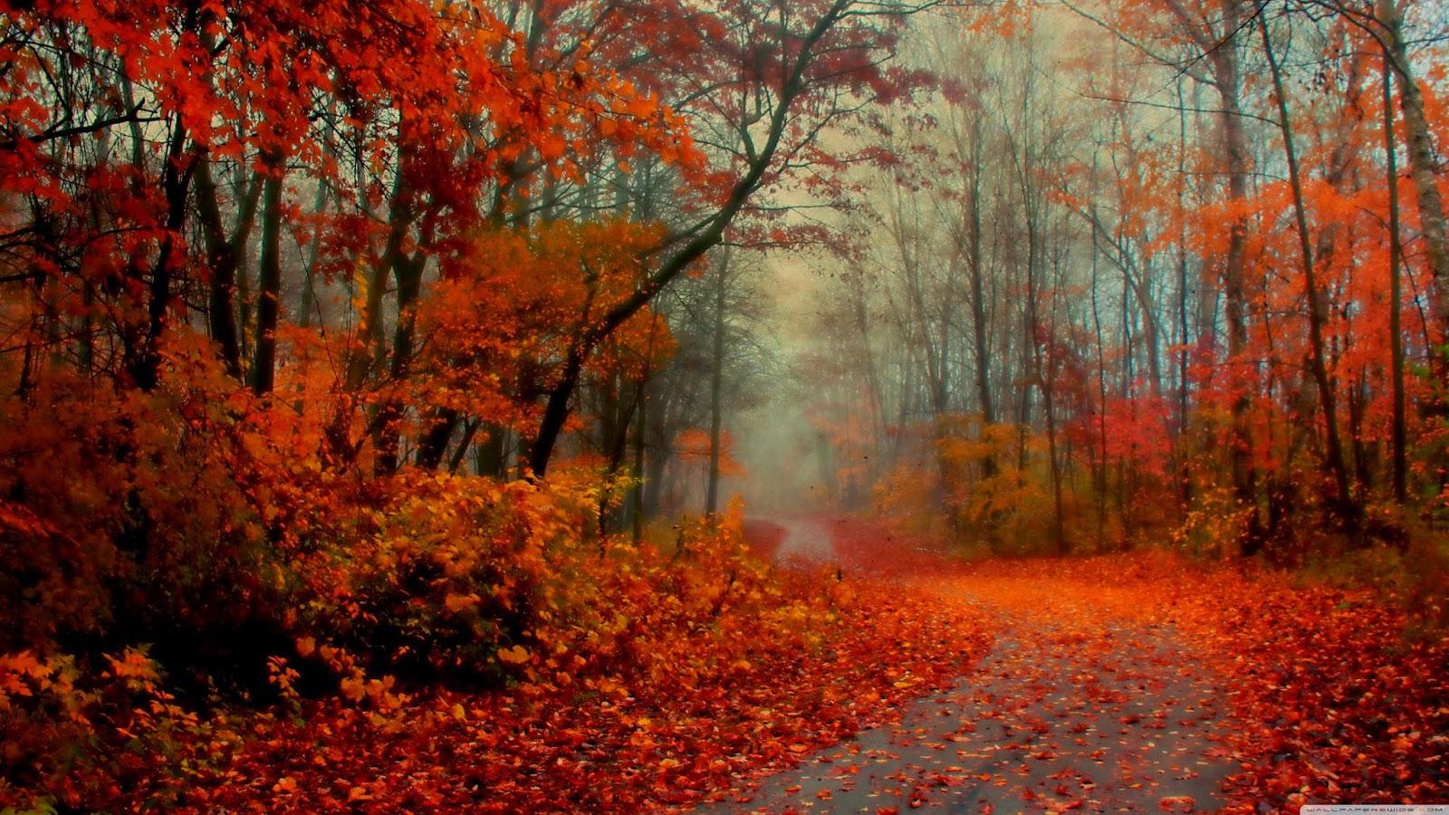 Romantic Autumn Forest Cool Backgrounds