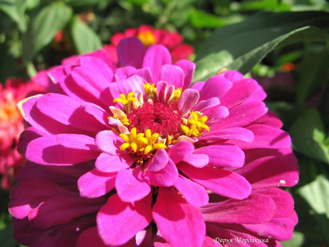 flower, flowerqram, plant, instagood, цветы, цветок, цвет, дача, фазенда, огород, сад, клумба, садовыецветы, флора, флористика, лето