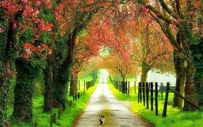 jalan-jalan dihujung minggu menyaksikan keindahan alam semulajadi