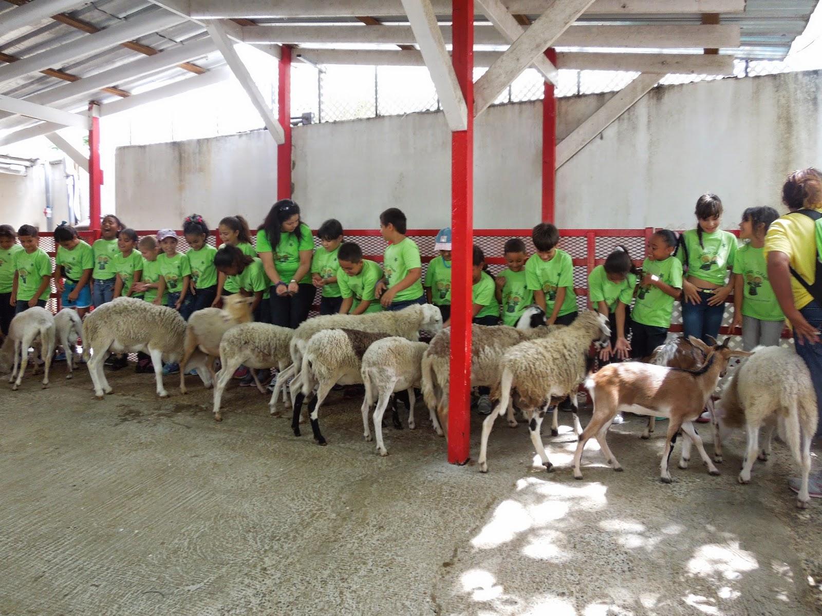 The learning spot villa campestre guaynabo for Campamento de verano jardin botanico caguas