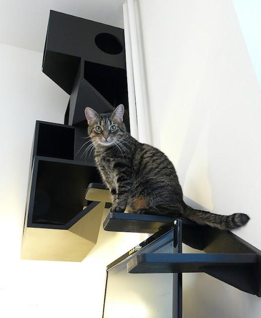 Rumah Kucing 3