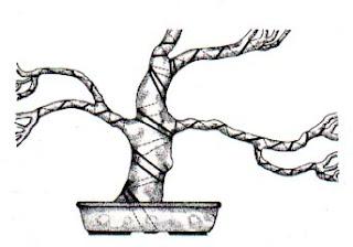 training bonsai, bonsai wire