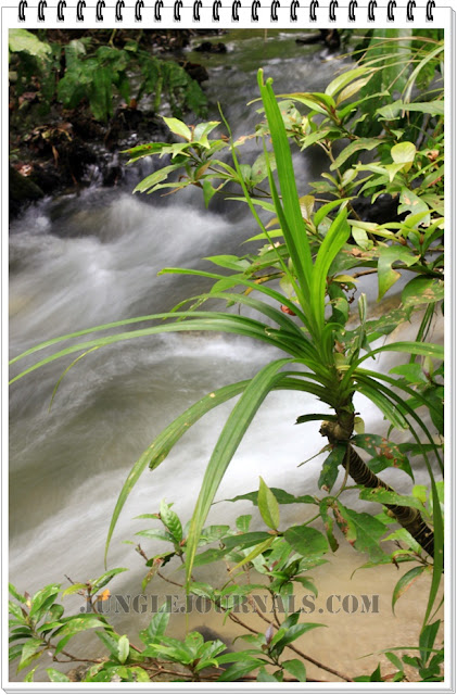Monsoon Jungle Camping Log ~ Nature Photography Pics