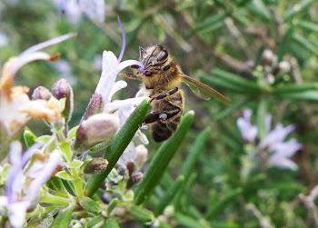 Ens agrada observar els insectes i fotografiar-los. Els teniu tots a la pestanya veïns de l'hort.