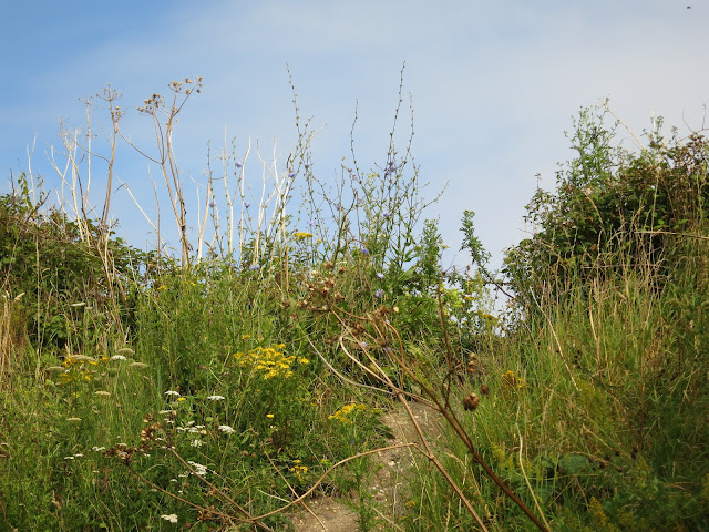 An earth path up a bank between wild flowers.